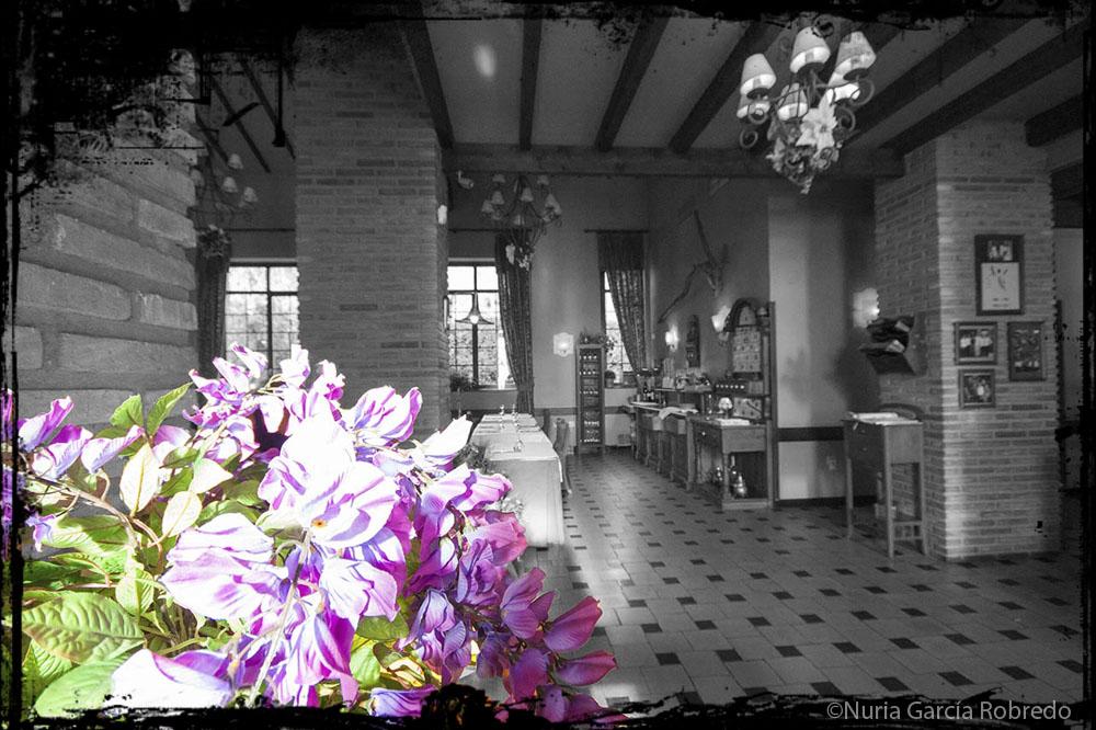 Colorido con flores llenando el ambiente