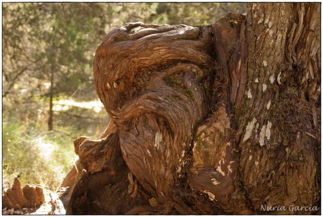 ¿Qué véis en este tronco?