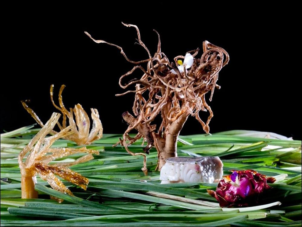 Lubina, flor de alcachofa y